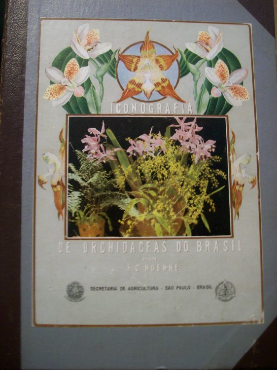 Iconografia De Orchidaceas Do Brasil Orchids of Brazil