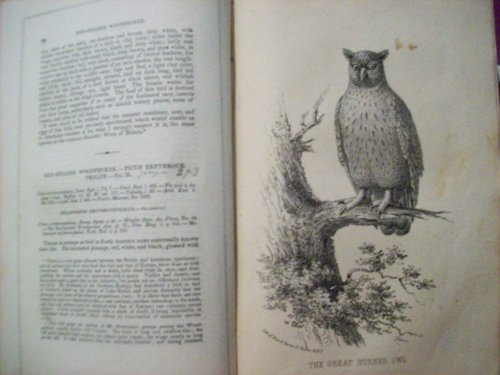 Wilsons American Ornithology with Notes By Jardine To Which is Added A Synopsis of American Birds Including Those Descibed By Bonaparte Audubon Nuttall and Richardson