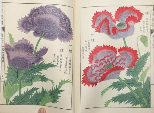Japanese Botanical Book