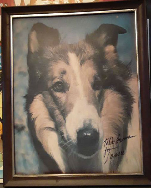 Lassie Photo signed by Lassie